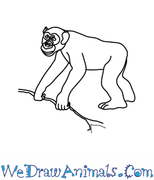 How to Draw a Chimpanzee in 8 Easy Steps
