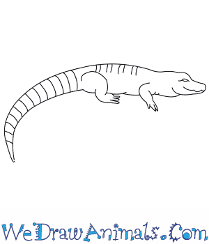 How to Draw a Chinese Alligator in 7 Easy Steps
