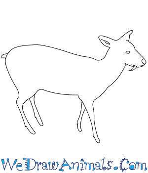 How to Draw a Chinese Water Deer in 8 Easy Steps