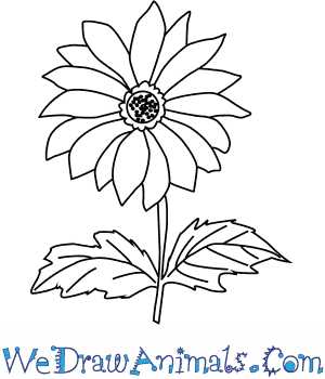How to Draw a Chrysanthemum Flower in 4 Easy Steps
