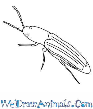 How to Draw a Click Beetle in 7 Easy Steps
