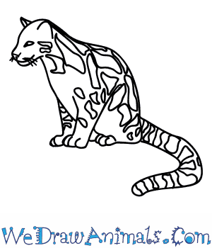 How to Draw a Clouded Leopard in 8 Easy Steps