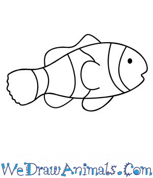 How to Draw a Clownfish in 5 Easy Steps