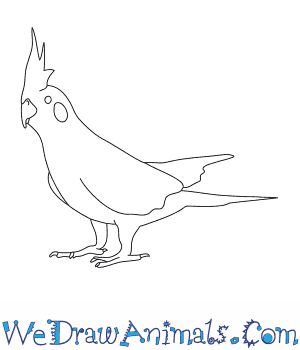 How to Draw a Cockatiel in 7 Easy Steps