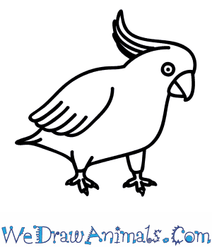 How to Draw a Cockatoo in 7 Easy Steps