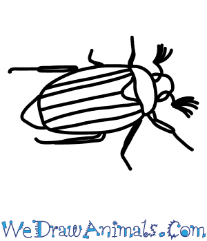 How to Draw a Cockchafer in 6 Easy Steps