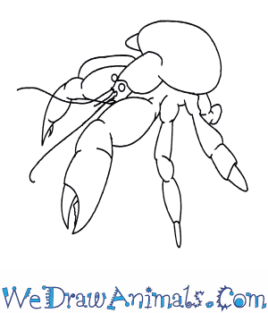 How to Draw a Coconut Crab in 8 Easy Steps