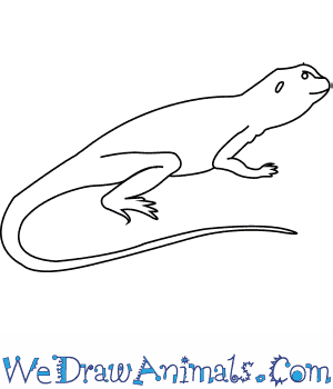 How To Draw A Collared Lizard