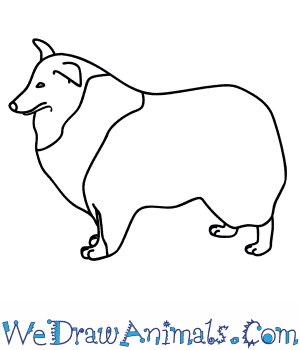How to Draw a Collie Dog in 8 Easy Steps