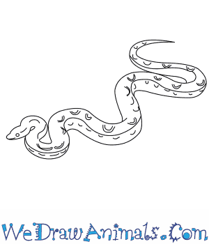How to Draw a Columbian Rainbow Boa in 5 Easy Steps