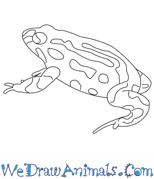 How to Draw a Corroboree Frog in 6 Easy Steps
