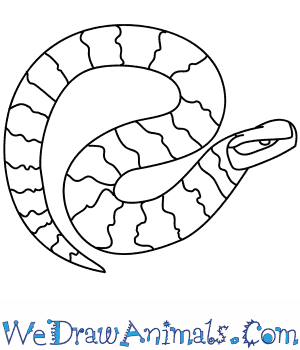How to Draw a Cottonmouth in 4 Easy Steps