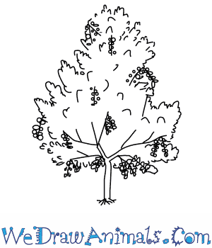 How to Draw a Cottonwood Tree in 6 Easy Steps