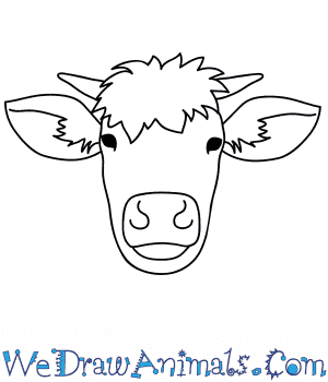 How to Draw a Cow Face in 9 Easy Steps