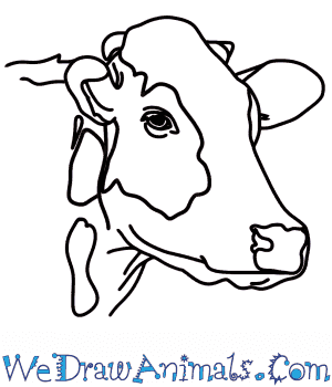 How to Draw a Cow Head in 7 Easy Steps