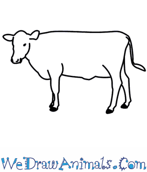 How to Draw a Cow in 6 Easy Steps