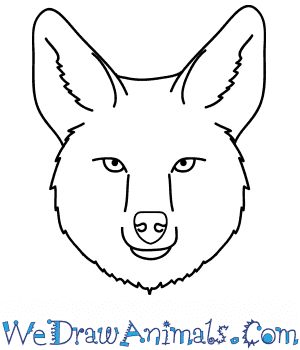 How to Draw a Coyote Face in 9 Easy Steps