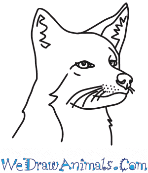 How to Draw a Coyote Head in 7 Easy Steps