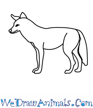 How to Draw a Coyote in 9 Easy Steps