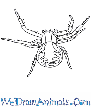 How to Draw a Crab Spider in 8 Easy Steps
