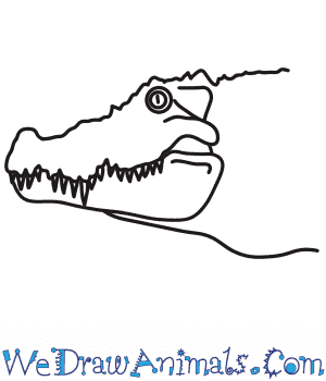 How to Draw a Crocodile Head in 6 Easy Steps