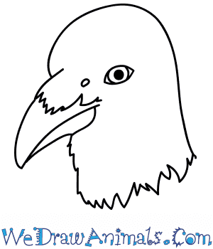 How to Draw a Crow Face in 9 Easy Steps