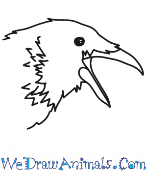 How to Draw a Crow Head in 6 Easy Steps