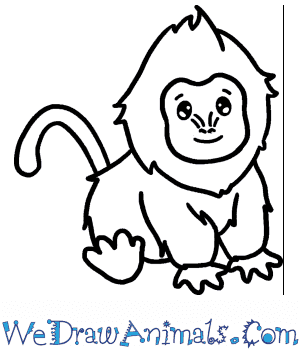 How to Draw a Cute Baboon in 5 Easy Steps