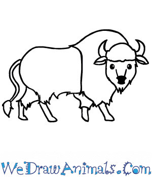 How to Draw a Cute Bison in 5 Easy Steps