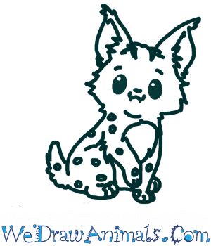How to Draw a Cute Bobcat in 6 Easy Steps