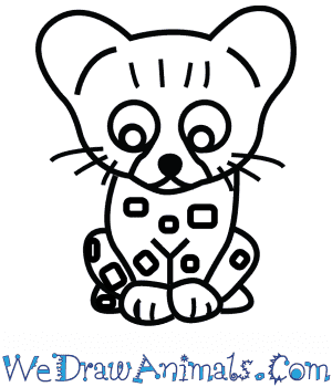 How to Draw a Cute Leopard in 4 Easy Steps