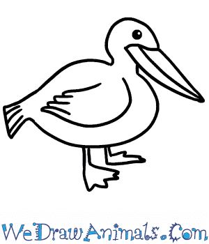 How to Draw a Cute Pelican in 5 Easy Steps