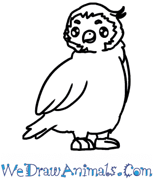 How to Draw a Cute Peregrine Falcon in 4 Easy Steps