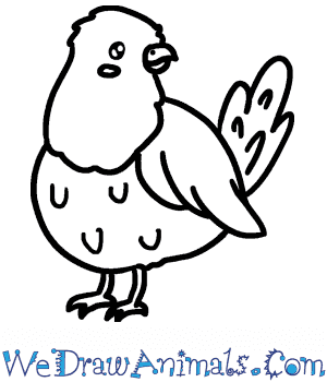 How to Draw a Cute Pigeon in 5 Easy Steps