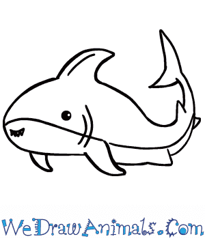 How to Draw a Cute Shark in 5 Easy Steps