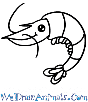 How to Draw a Cute Shrimp in 4 Easy Steps