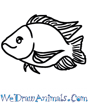 How to Draw a Cute Tilapia in 4 Easy Steps