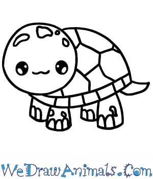How to Draw a Cute Tortoise in 6 Easy Steps