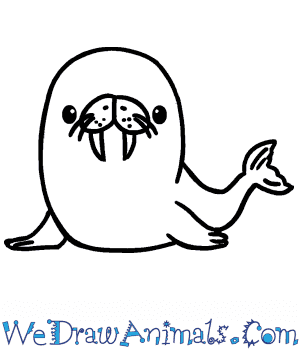 How to Draw a Cute Walrus in 5 Easy Steps
