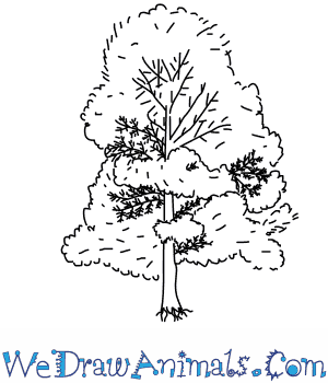 How to Draw a Cypress Tree in 4 Easy Steps