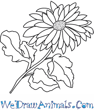 How to Draw a Dahlia Flower in 6 Easy Steps