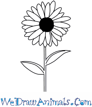How to Draw a Daisy Flower in 6 Easy Steps