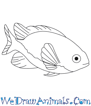How to Draw a Damselfish in 7 Easy Steps