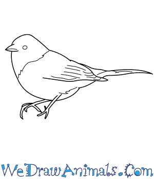 How to Draw a Dark Eyed Junco in 7 Easy Steps