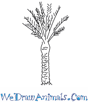 How to Draw a Date Palm Tree in 3 Easy Steps