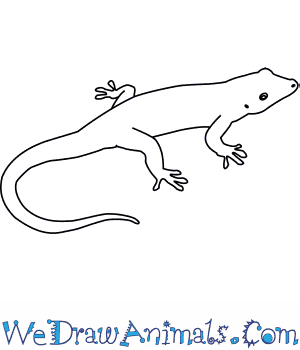 How to Draw a Day Gecko in 4 Easy Steps