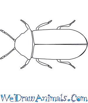 How to Draw a Death Watch Beetle in 5 Easy Steps