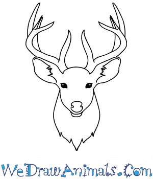 How to Draw a Deer Face in 8 Easy Steps
