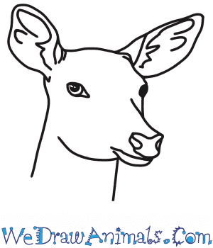 How to Draw a Deer Head in 6 Easy Steps