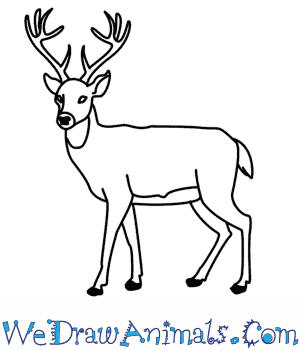 how to draw a deer in 11 easy steps
